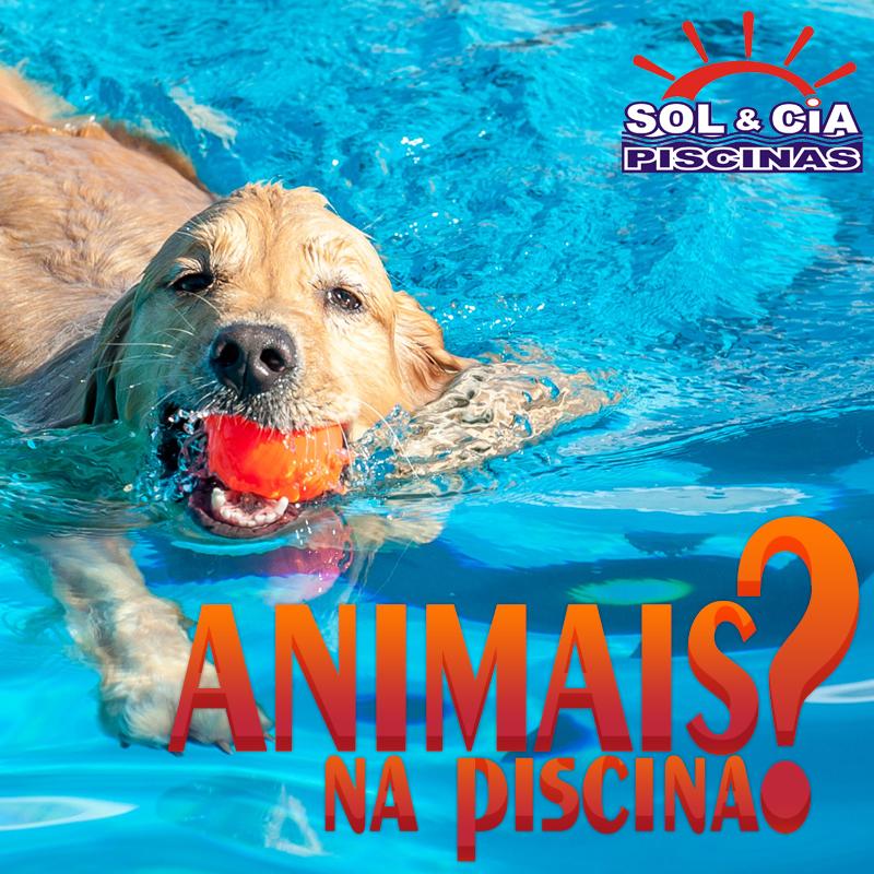Animais de Estimação na Piscina!!
